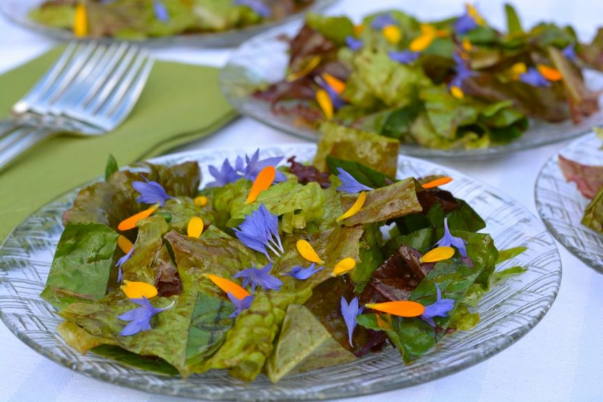 Garden greens that have just been tossed with a homemade salad dressing and sprinkled with colourful edible flower petals, wow!